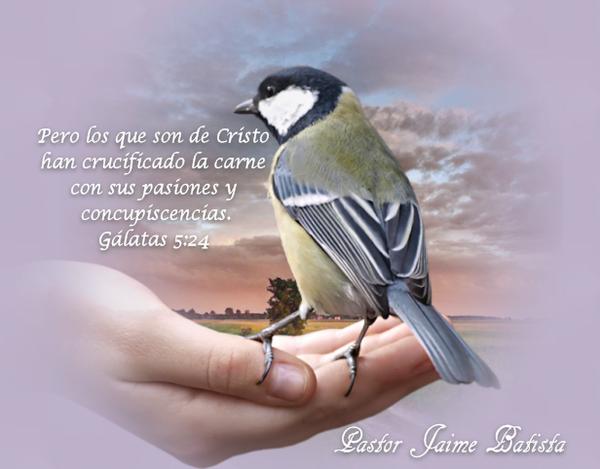http://fuentedevida.f.u.pic.centerblog.net/91fa8e43.png